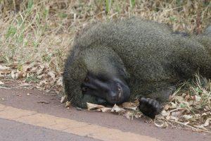 Fahrt in den Ngorongoro Nationalpark