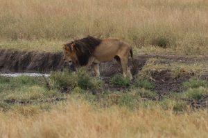 Serengeti-Nationalpark