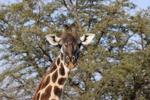 Serengeti-Nationalpark - Fahrt zum Ngorongoro Krater