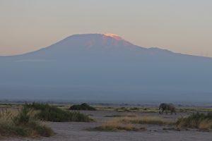 Amboseli Nationalpark - Kilimanjaro