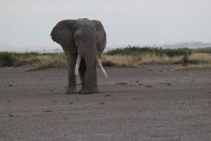 Amboseli Nationalpark