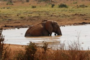 Tsavo Ost Nationalpark - Elefanten Bad, Fotoserie