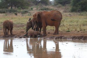Tsavo Ost Nationalpark - Mit Muttis Hilfe aus der Badewanne :-)