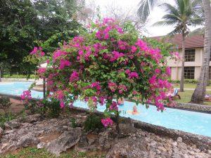 Badeurlaub im Tiwi Beach Resort - das Resort