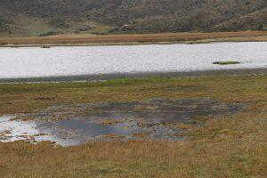 Nationalpark Cotopaxi - Lagune Limpiopungo
