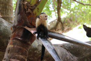 Manuel Antonio Nationalpark - Regenwald, Strand und Tierwelt