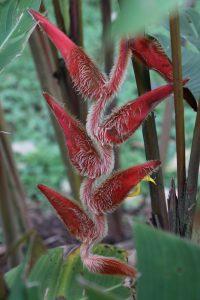 Region Cartago - Lankester Botanical Garden / Botanischer Garten