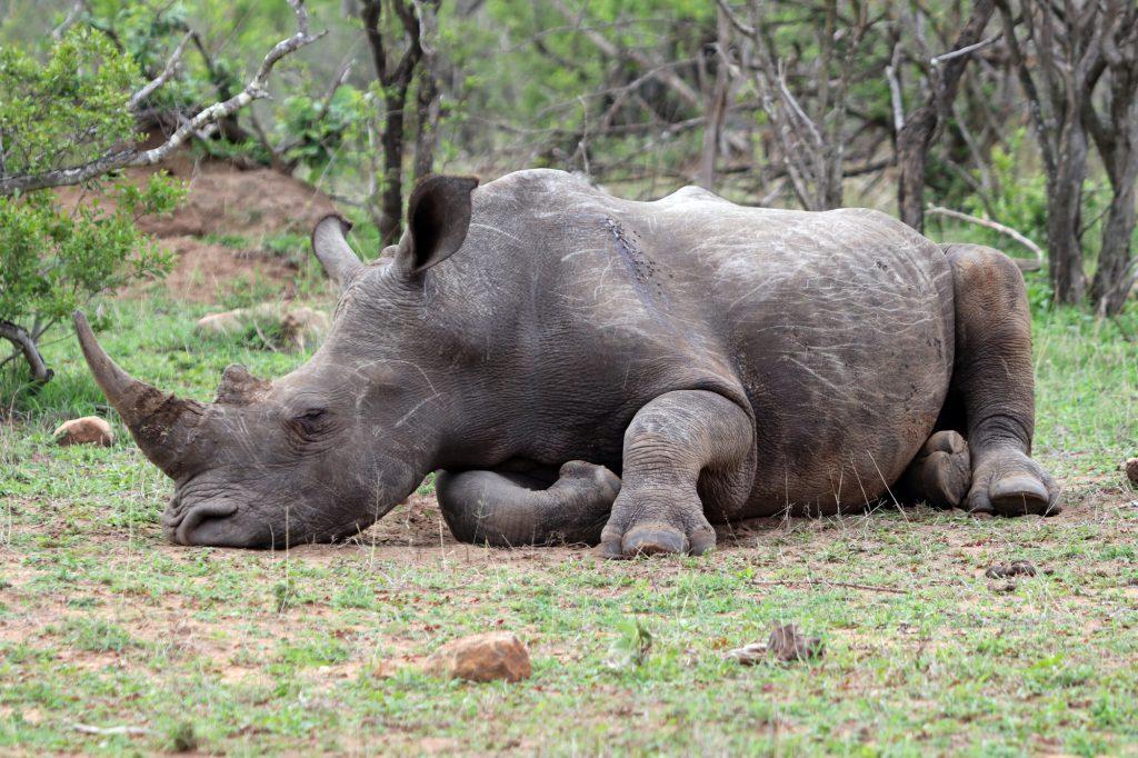 Südafrika - Kruger Nationalpark, 17.11.2019