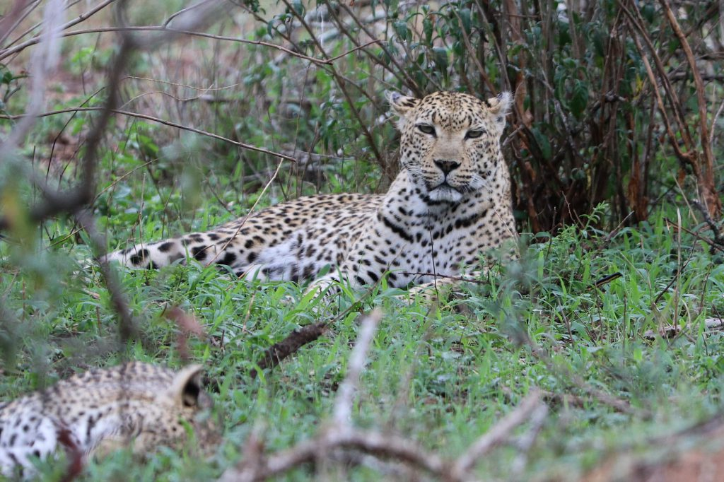 Südafrika - Kruger Nationalpark, 13.11.2019